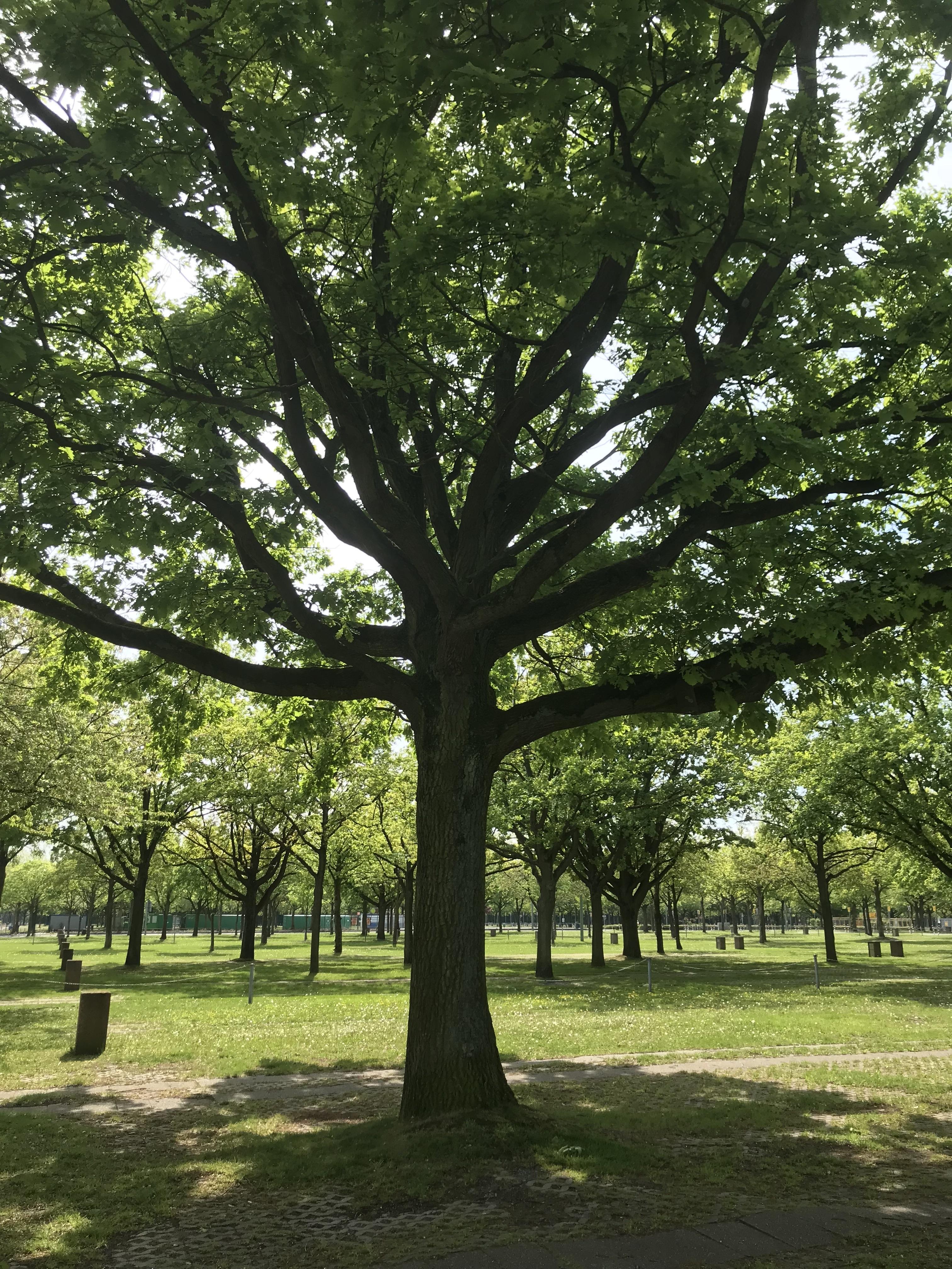 Baumschutzgruppe Düsseldorf
